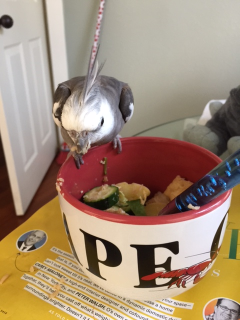 """This tactic is called """"The Vulture."""" Hunch over, narrow your eyes to slits, bare your beak, and look very grumpy."""