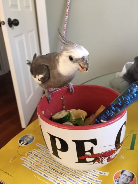 """This tactic is called """"The Beakmaster."""" Open your eyes wide and your beak wider, while leaning forward over the dish."""