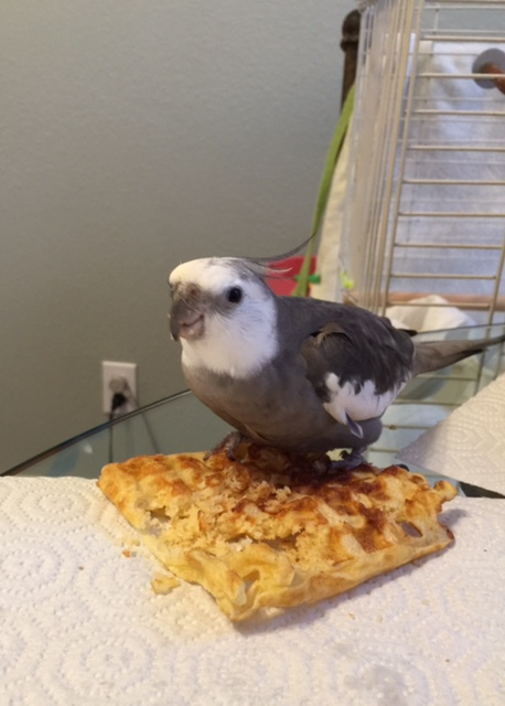 Mom, this waffle is hiding something. Do you know anything about this?