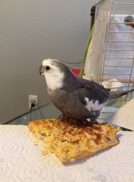 """It's a """"dinner time"""" waffle? Oh - well that explains it then."""
