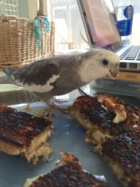 """In fact, I can consume my portion (well, technically they are all """"my portion"""") and her portion and she still won't figure it out."""