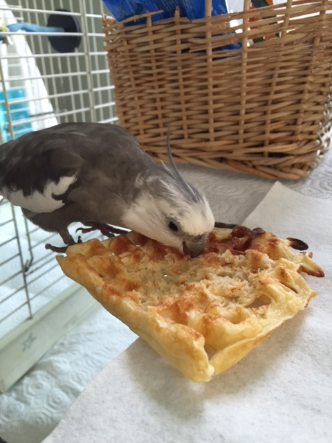 Nom nom nom. This waffle is so delicious.
