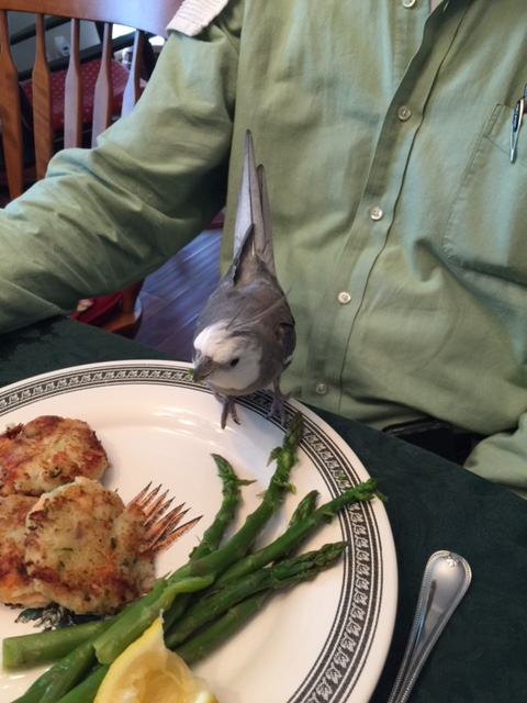 Although sometimes I do wonder why he always wants to trade plates with my large featherless assistant after I'm done dining....