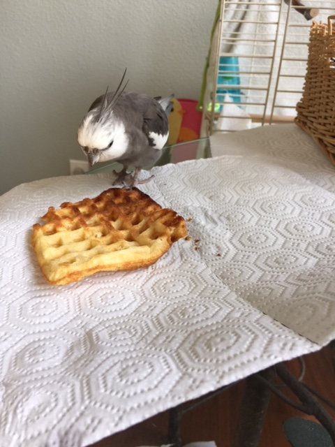 It appears to be.....a totally unattended....WAFFLE.