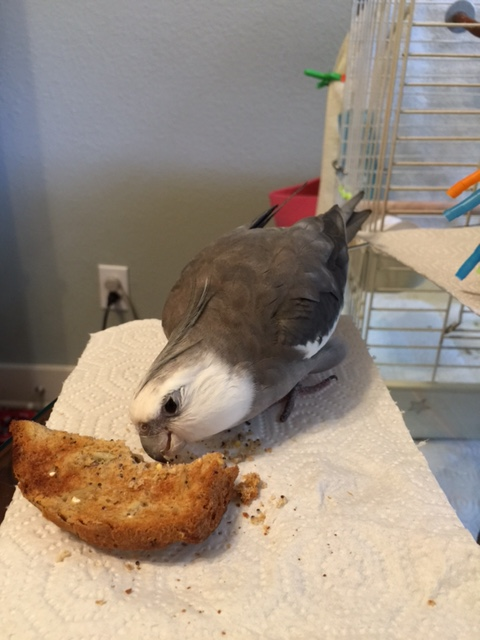Yes, I mean you, sunflower seeds. And you, millet seeds. And you, pumpkin seeds....