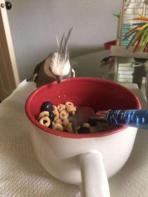 Oh, ho, ho! I spy hiding Cheerios!