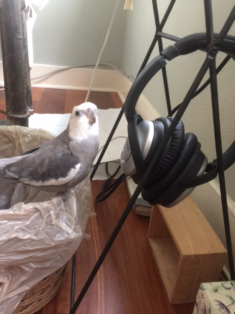 What do you mean we need more than just a pair of headphones to record my podcast? It's shiny, it's grey, I look good next to it - works for me!