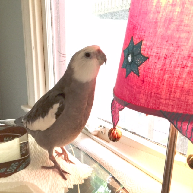 Poor thing. She keeps asking for tips, but she can't grow any feathers....so what can I do?