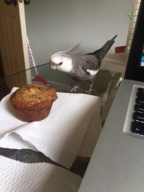 Then, as if receiving a message from the muffin itself, he suddenly draws back, listening intently to a sound only he can hear.