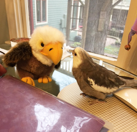 Well yes sir, Mr. Bald Eagle President sir, I would be happy to take a photo with you and give you my claw-o-graph! Happy fourth of July!