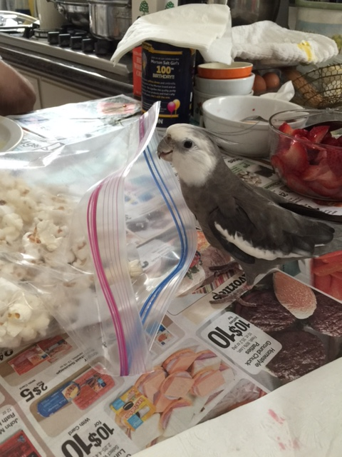 Well, hello. You must be today's popped props. I am Pearl, the feathery and famous super(bird)model.