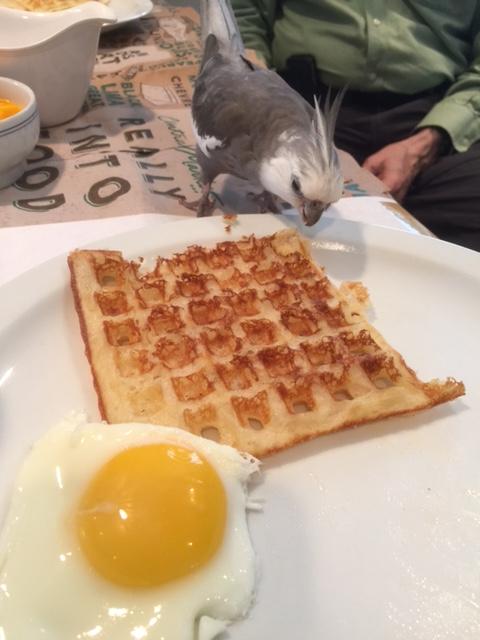 Ahhhh. Hello waffle!