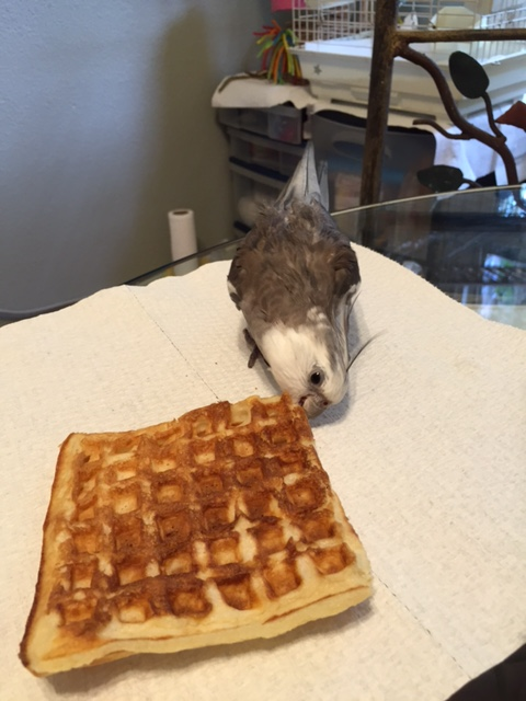 I will do this by building a complete flavor profile of this waffle.