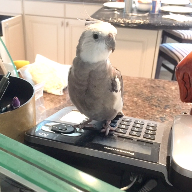 Hi! Thanks for calling 1-800-I'm-So-Cute. How may we help you?