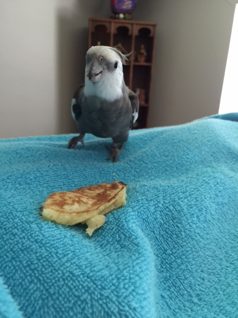 """And let her know I'm especially appreciative of how """"flingable"""" this pancake is about to become...."""