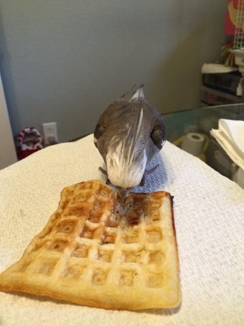 I will just quickly gain ownership of this waffle by staring it into submission.