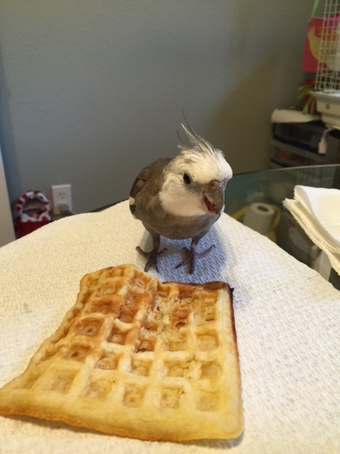The waffle is MINE. Stay back. Yes, that means you - the large featherless one.