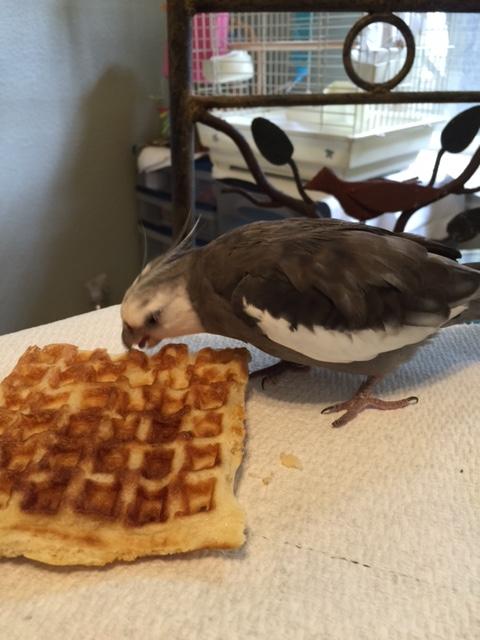 First I will open my beak...