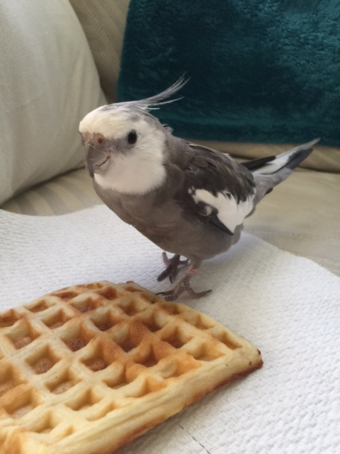 Well of course I know it's a waffle. But it just suddenly appeared out of nowhere....