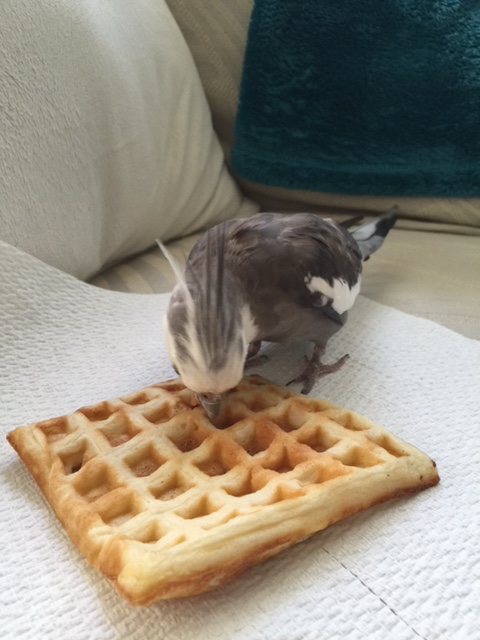 """The overtime can start right after I take my contractually-stipulated """"waffle break."""""""