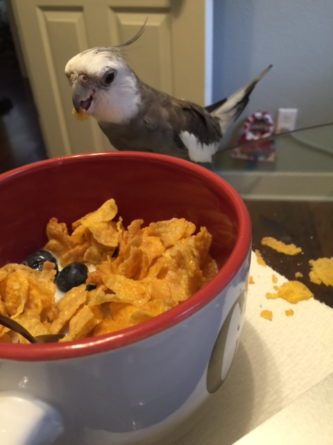 Not to mention that my large featherless assistant seems to really be enjoying their flavor....that can't be good.