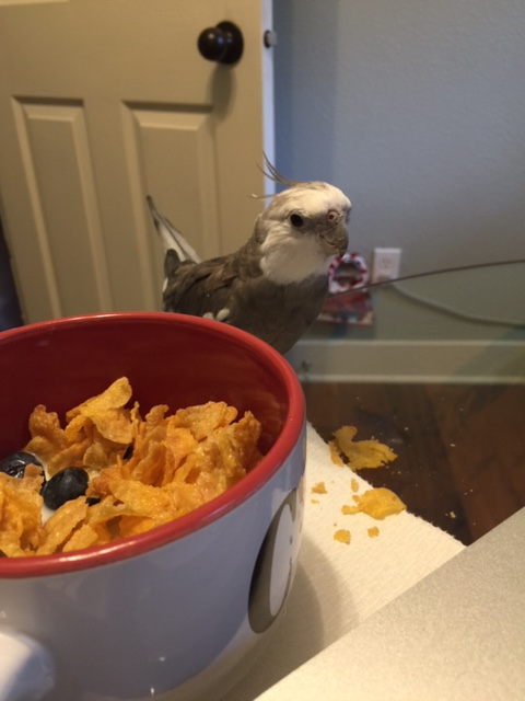 """Well here I am at the """"Cornflake Convention."""""""