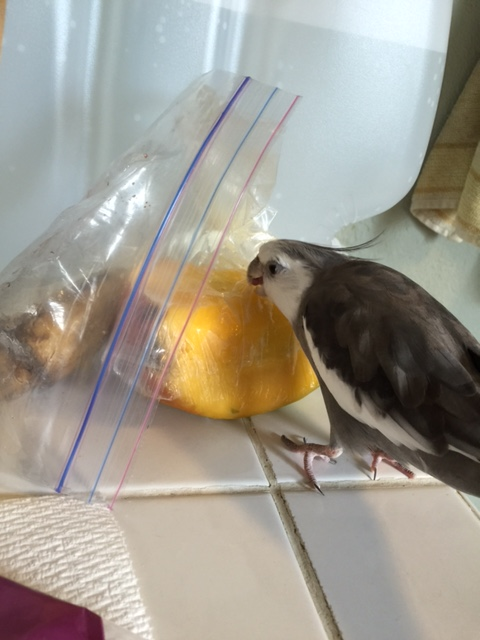 """I am going to turn you over to my large featherless assistant now to discuss the test results. Don't mind the large knife and small flat plate she is carrying....it is all part of the """"mentoring"""" process."""