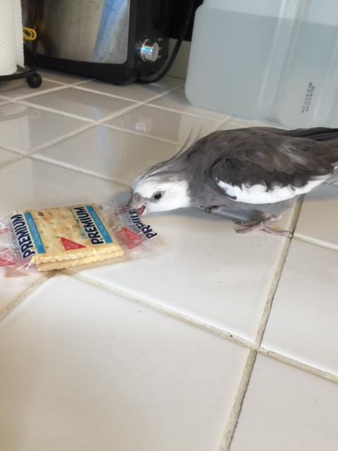 Well hellooooo there tasty snack!