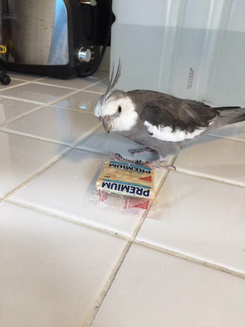 """Your name is """"Premium Saltine"""" and you are very crispy and crunchy and flingable?"""