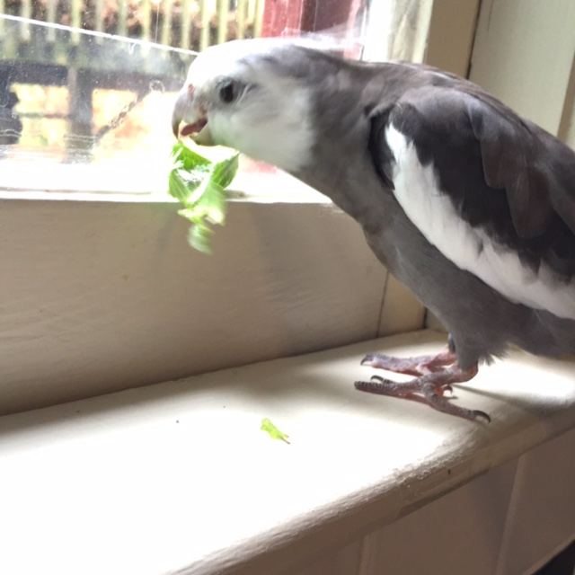 """Nom nom nom....so this first scene we will call """"The Crunch Factor."""""""