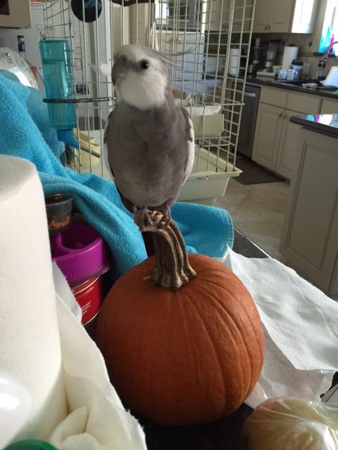 "(Whispered) Don't tell my pumpkin, Grandma, but I'll go with ""regular""...."
