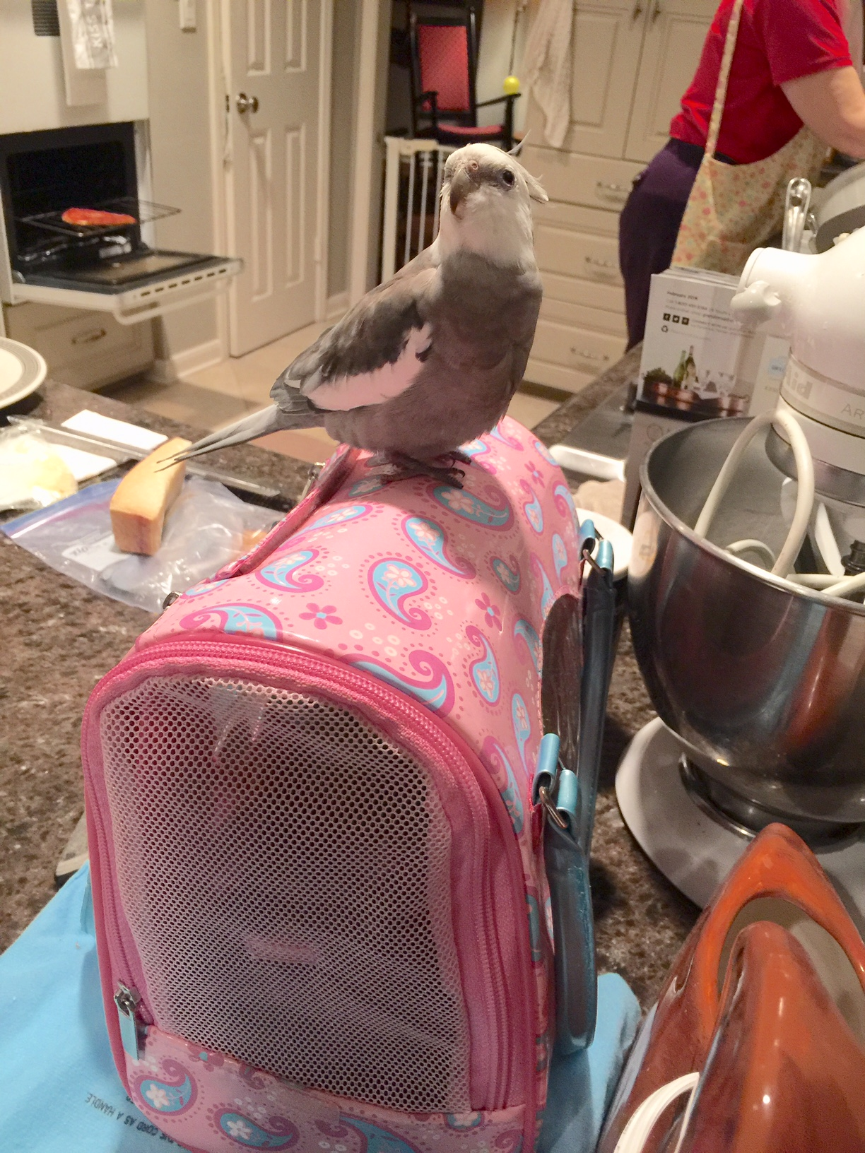 """Happiness is....when you are still out and """"free range"""" and your little shelled sister is already sequestered in her carrier!"""