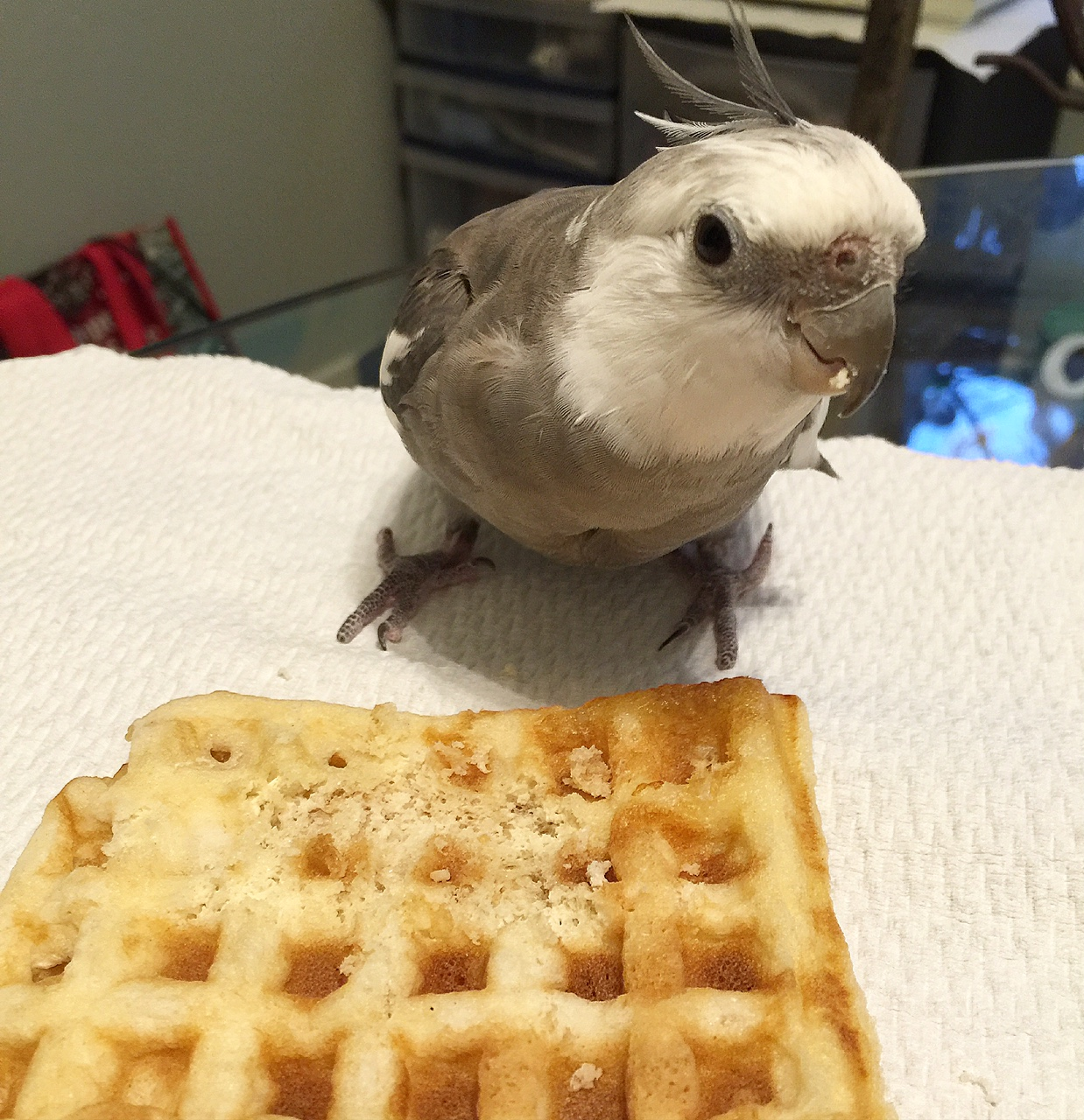 Happiness is....a warm toasted waffle and somebody to share it with (or at least admire how cute you look while you eat it!)