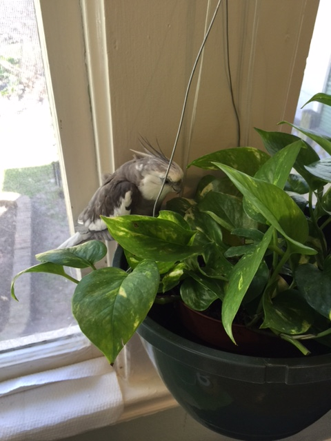 So we meet at last. I must say - you look extraordinarily healthy for one of my large featherless assistant's houseplants.