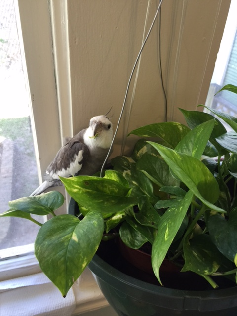 """What do you mean, """"no sampling the houseplants? HE contacted ME, Mom!"""""""