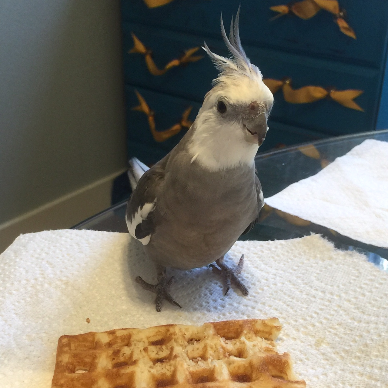 Pearl. Posing by one of his personal Small Chef's organic, freshly toasted waffles.