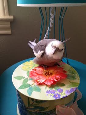 """An innovative """"covered nest"""" (just remove the flowery top to reveal the plush accommodations inside!)"""