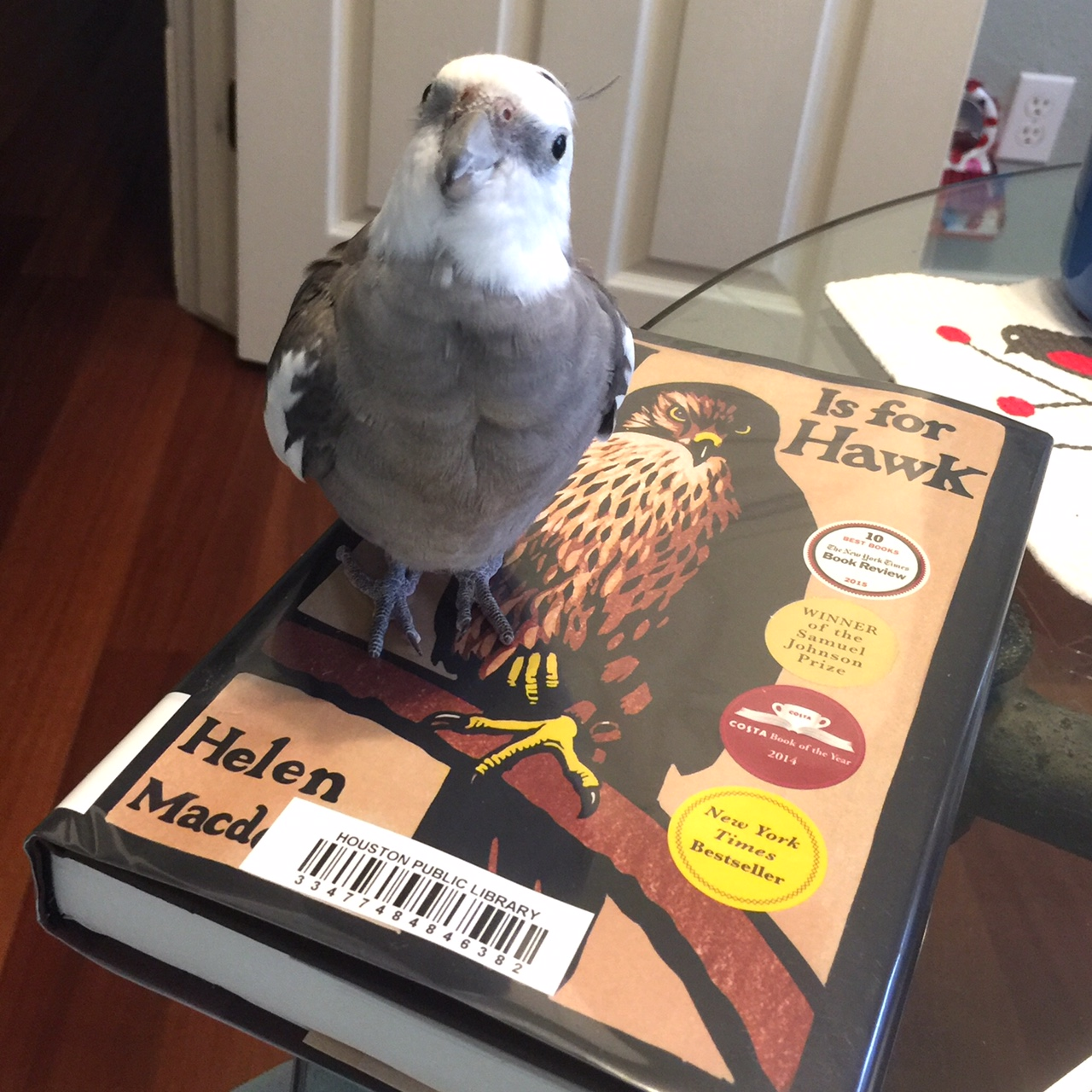 "A certain feathery literature expert poses with (on) the ""book o' the week."""
