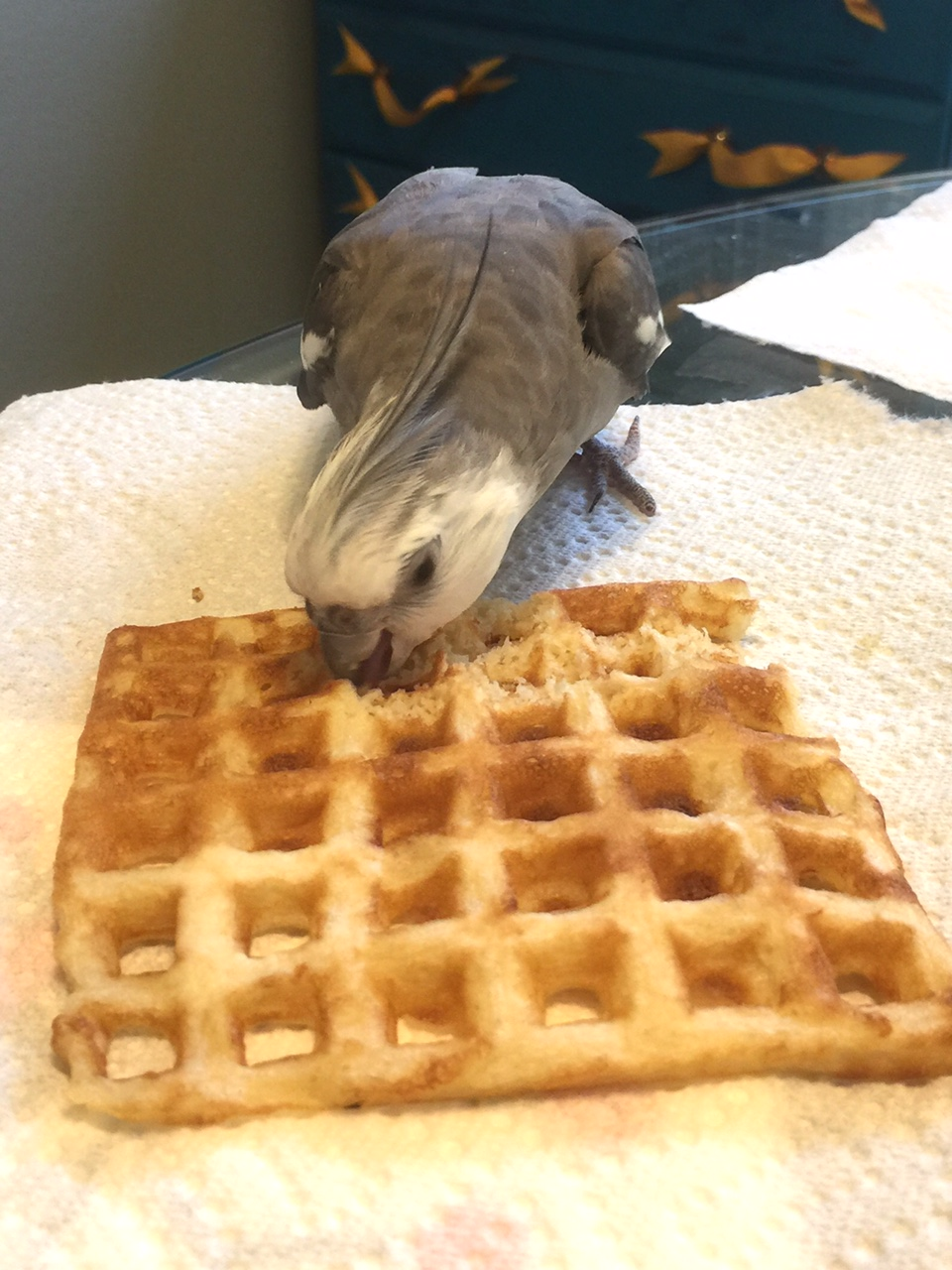 "The Q&A Expert fortifies himself with the world's tastiest delicacy, the ""waffle."""