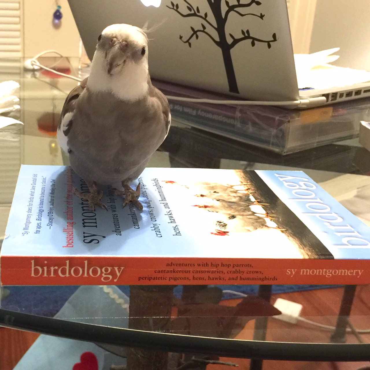 "An expert feathery member of the literati posing ""with book."""