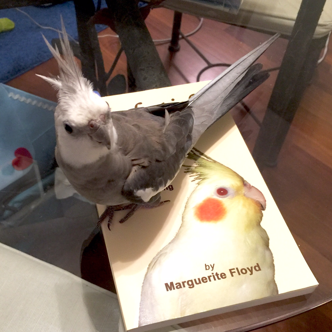 "The (single and seeking) book reviewer and feathers finds a wonderful read in ""Cockatiel Lessons!"""