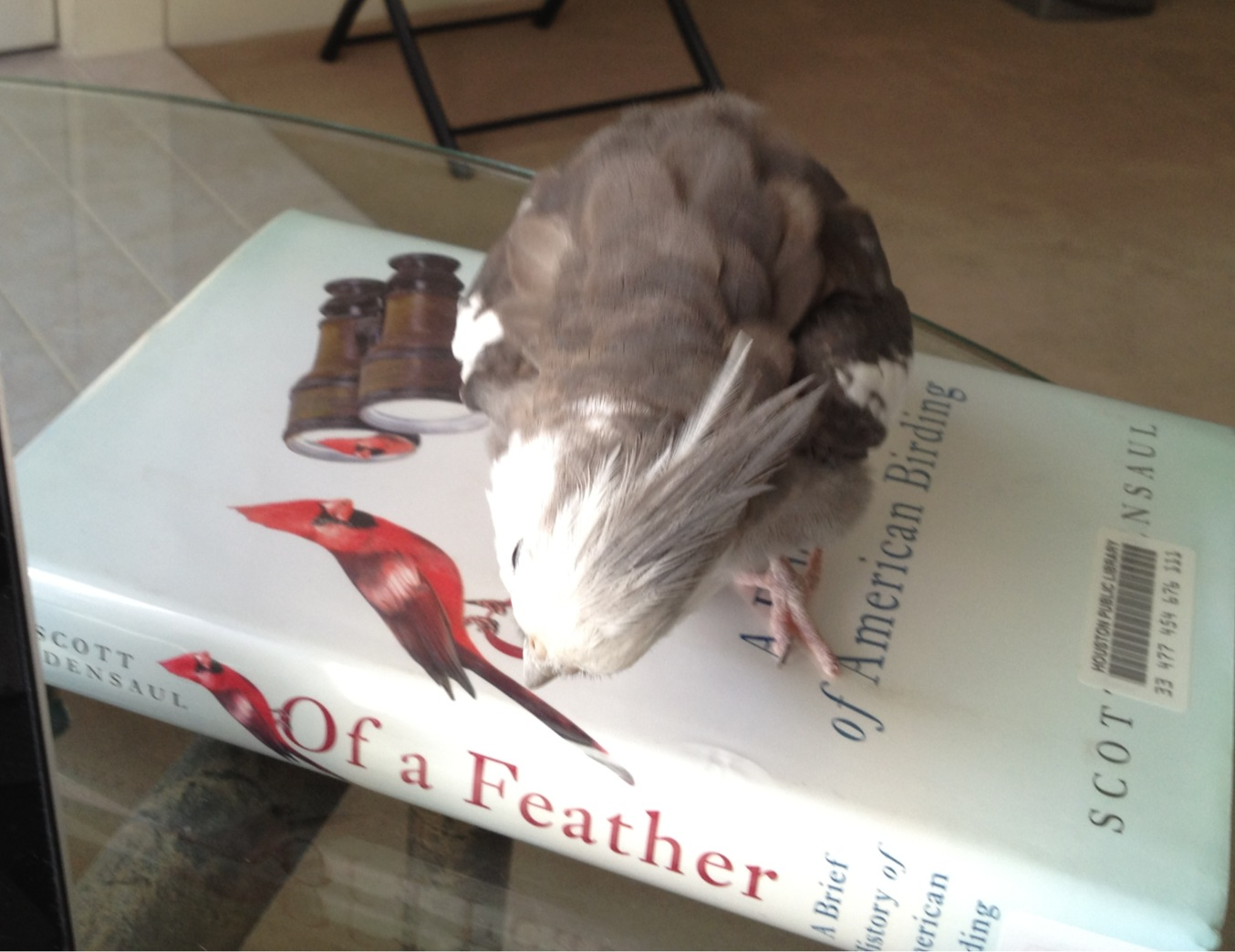The literature expert (with feathers) gives the book o' the week a thorough review.