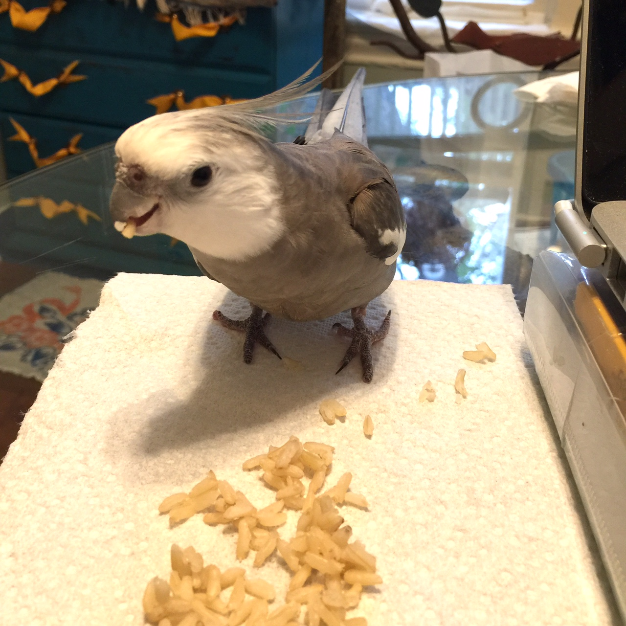 My mommy loves me so much - every time I fling another rice kernel she goes running to scrape up off whatever it stuck to, no matter how far away it is!