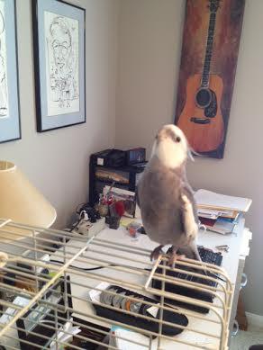 Pearl - singing loudly so everyone can enjoy being serenaded.
