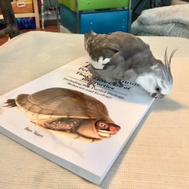 pearlboxturtlebook