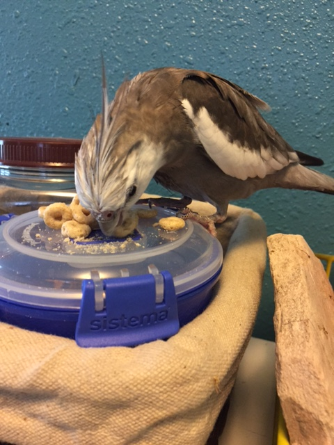 Happiness is...when your mommy is eating Cheerios and she gives you your own dish to crunch, crush and fling as you like.