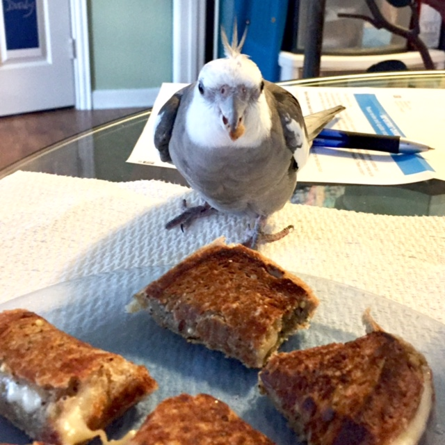 The super-spy stops, ponders, evaluating the cheezer for overall crispiness, crunchiness, cheeziness and flingability (a technical term).