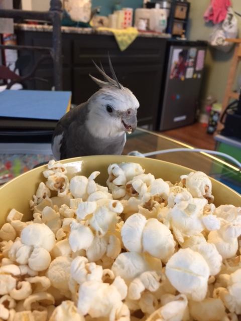 inspectorpopcorn6