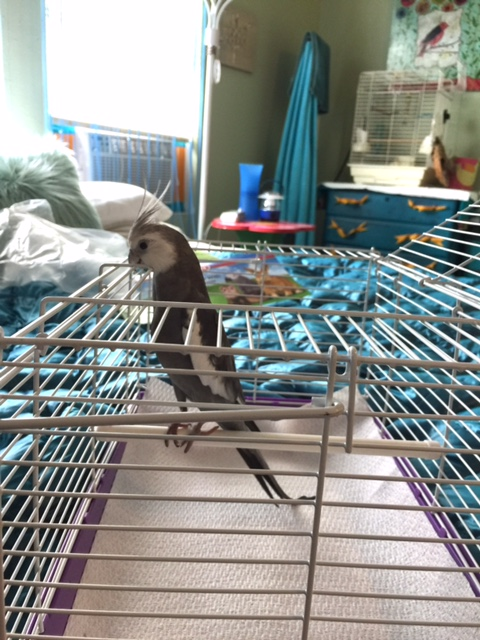 First I'll just stretch up like so, and then hook my sharp curved beak onto these white prison bars like so.....