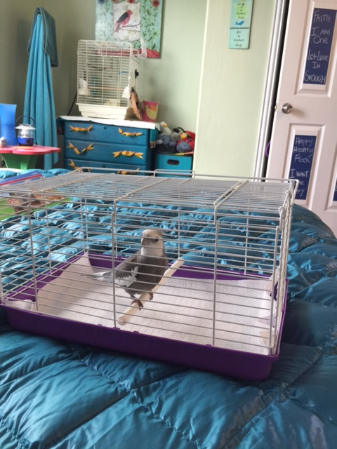 """No, I do not think it is """"roomier"""" with the top closed. No I don't want to hear your thoughts (yet again) on """"avian safety""""......"""